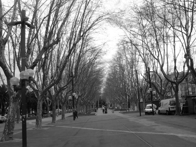 trees in perpiganan