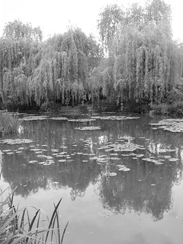 bw monet nympheas