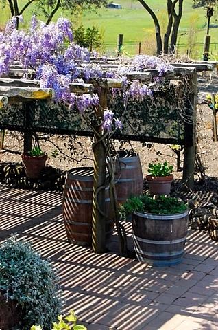 Viansa Winery 13
