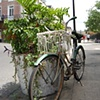 color bike portrait