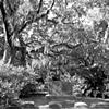 Bonaventure Cemetery #14- B&W