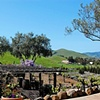 Viansa Winery 4