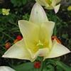 yellow open flower