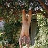 Tree Hang