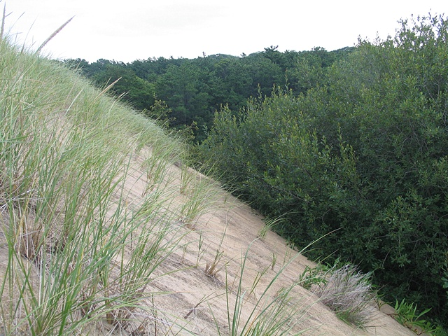 The Walking Dunes