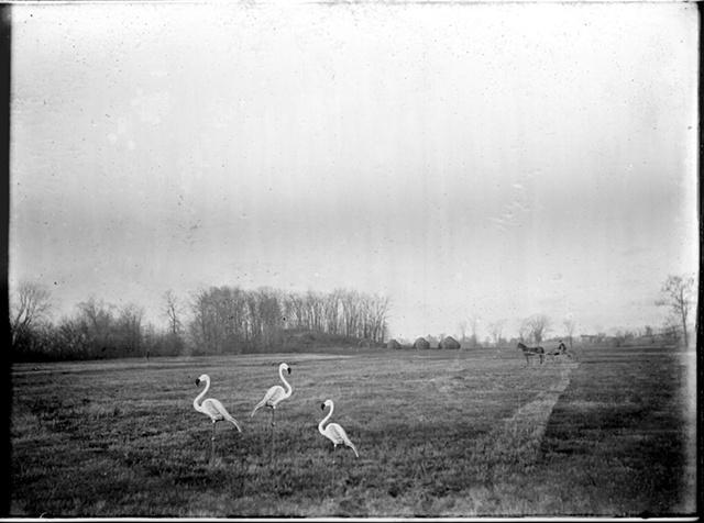 American Plastic Meadow