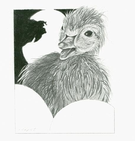Hatchling: Duck
