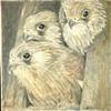 Three Baby Hawks