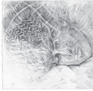 [head] Mary Patten