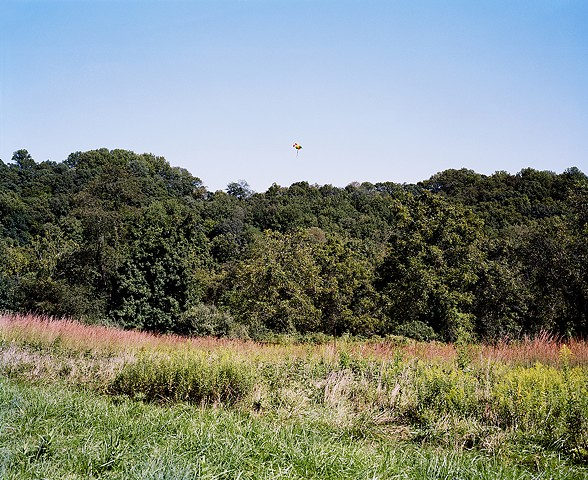 A Cluster of Helium Balloons Drifts Over the Forest