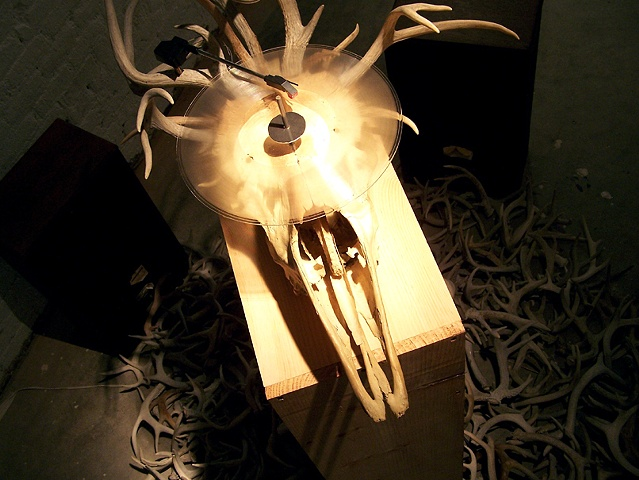 Moose skull record player by artists Owen Rundquist and Alexander DeMaria