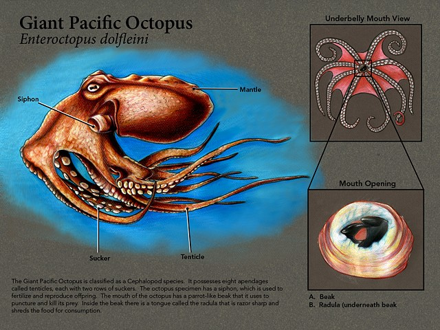 Octopus Marine Scientific Plate