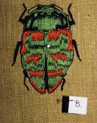 Beetle (detail)