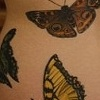 katies butterfly swarm