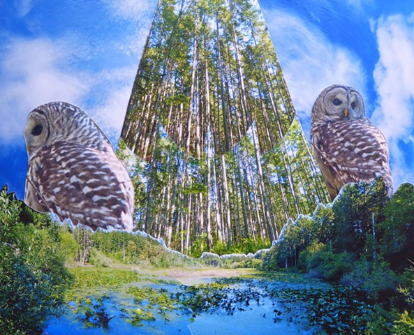 """Owls Over Fisher Pond"" - Photo Collage by Vashon Artist John Schuh"