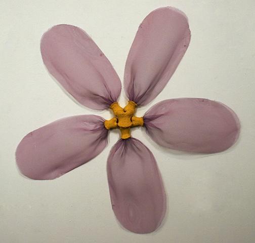 Pink Wallflower