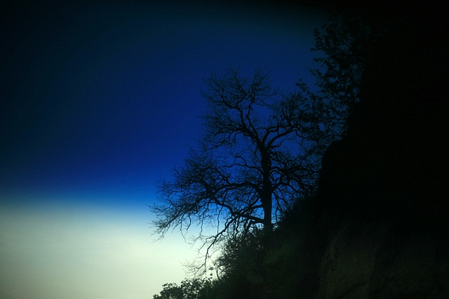blue oak II