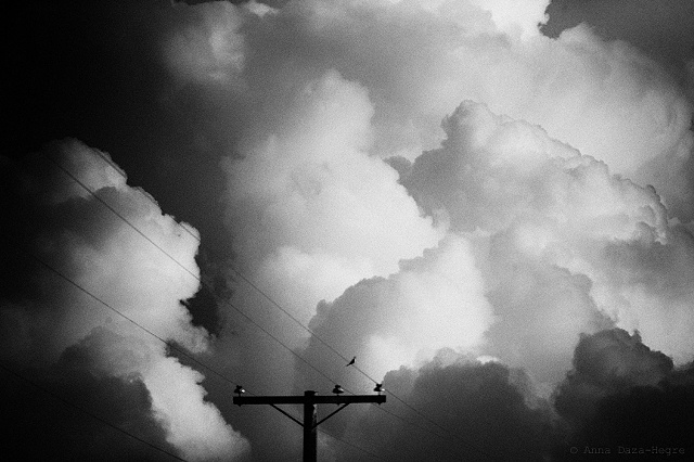 bird, wire, clouds