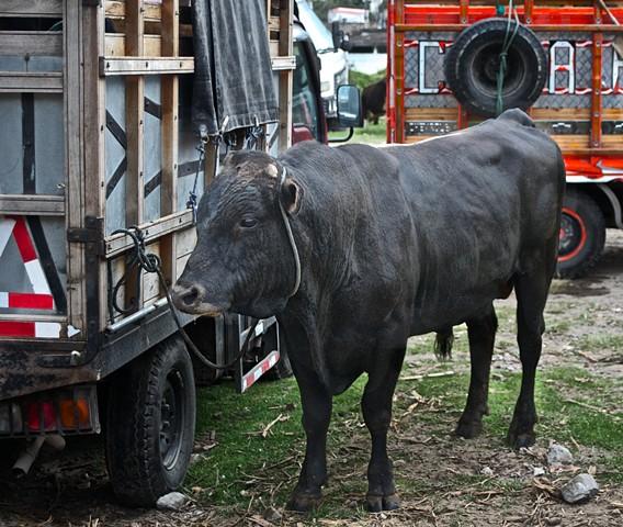 Bull, market