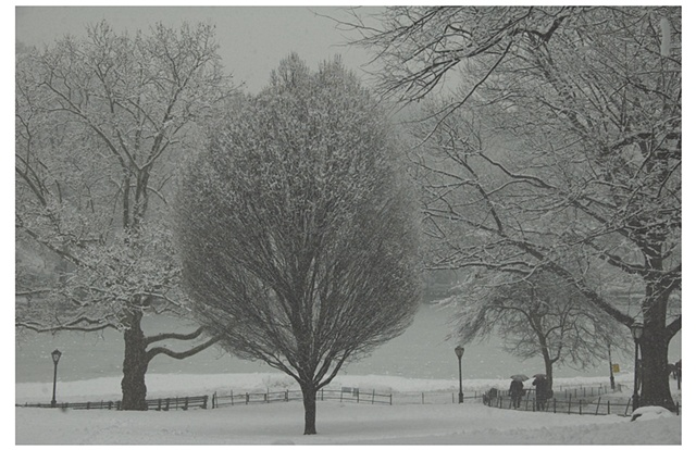 Central Park Winter Storm