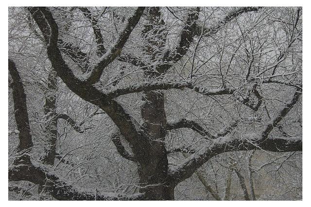 Snow Central Park New York City