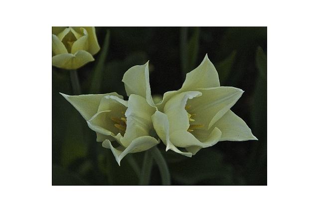 White Flower #5