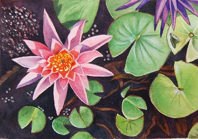 Watercolor painting of pink waterlily
