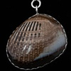 025 Fossil Clam with Sterling
