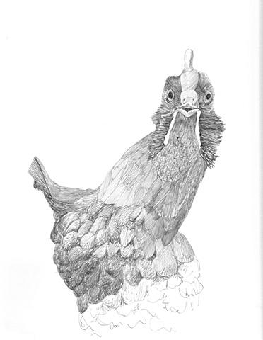 Chicken view 4