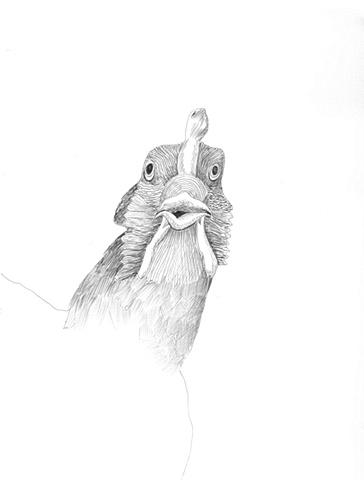 Chicken view 1
