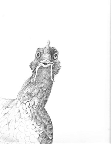 Chicken view 3