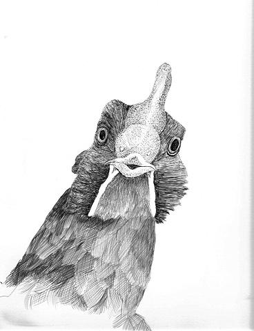 Chicken view 5