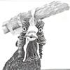 Chicken, view 12