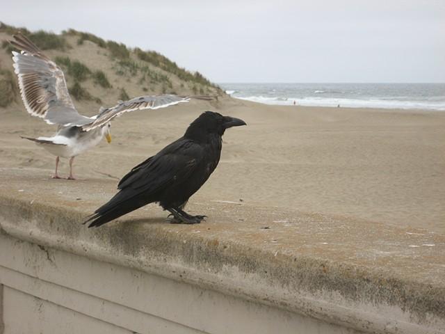Crow, Ocean Beach SF