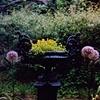 St. Lukes garden, NYC