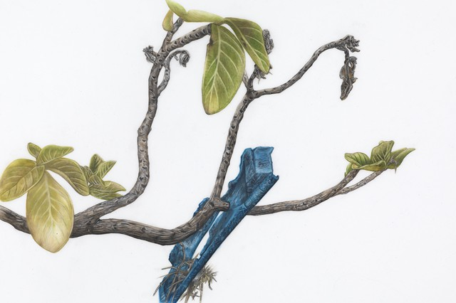 Tropical Almond Tree with Blue Plastic