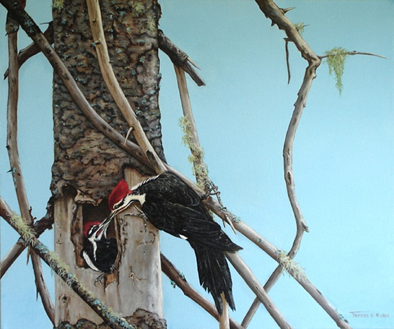 Oil painting pileated woodpeckers nest