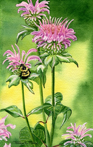 Bee Balm and Bumble Bee