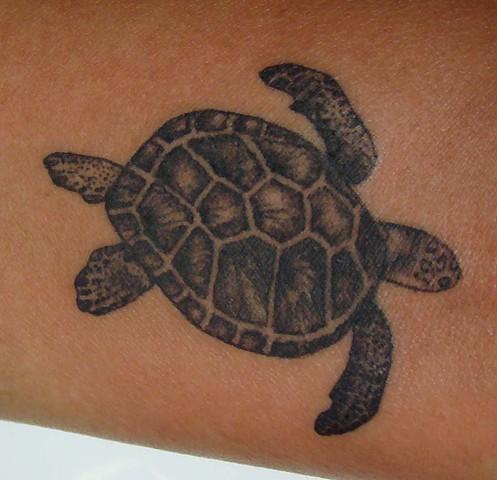 Single Needle Turtle
