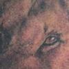 Dinah's Lion