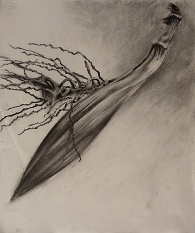 coconut flower, charcoal sketch, hawaii