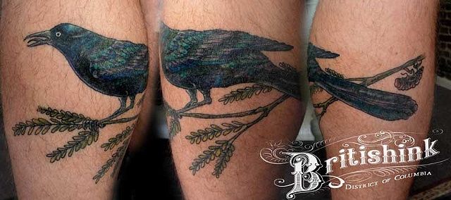 Grackle, Mesquite and Cicada