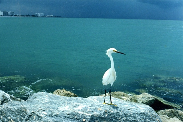 Bird at the ocean