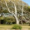 Jekyll Island trees