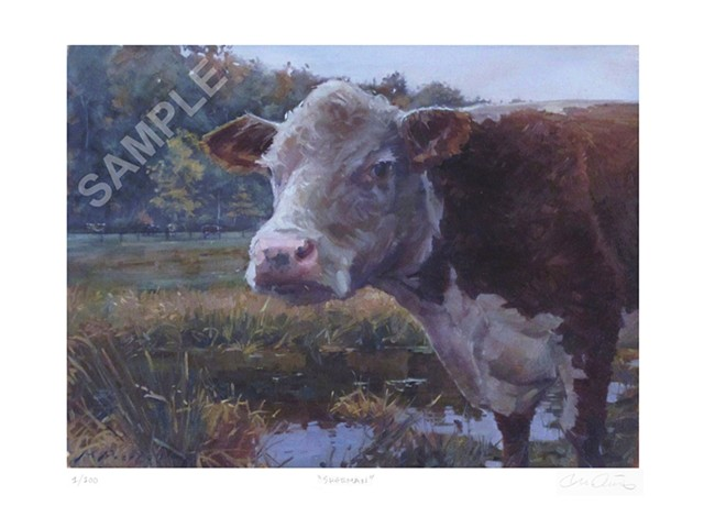 Catskill Animal Sanctuary, Cow, Sherman, Limited Edition Print