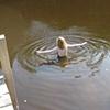 Ellie Swimming