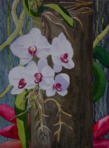 Tree Orchids