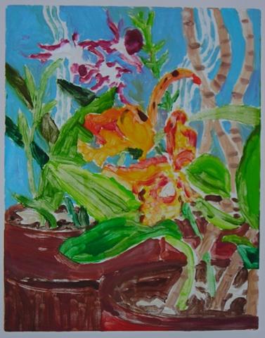 Pots of Orchids