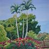 Palms Above Bougainvillea