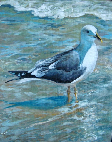 Seagull posing